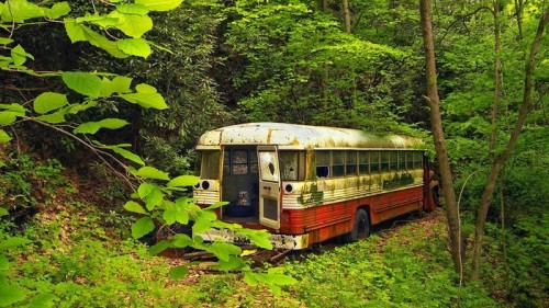 old bus in nature