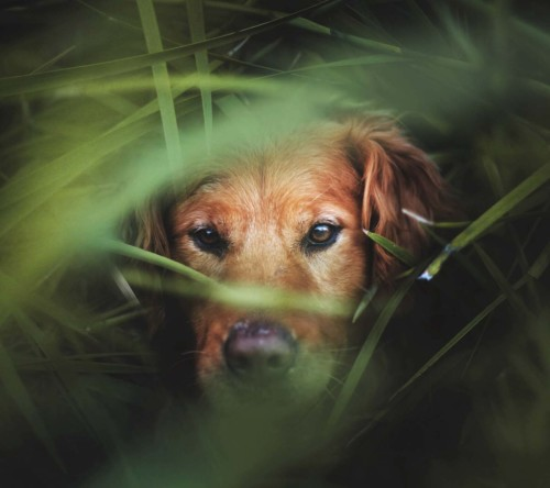 Dog In Grass